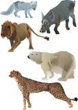 Animaux de faune Image libre de droits