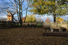Animaux de ferme Photo libre de droits
