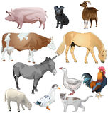 Animaux de ferme Photo stock