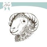Animaux de ferme croquis principal de moutons Image stock