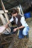 Animaux de ferme de alimentation d'éleveur de femme Photographie stock