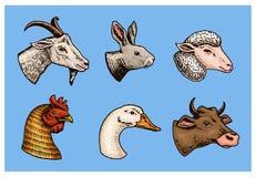 Animaux de ferme Tête d'un mouton domestique de lapin de vache à chèvre de porc Logos ou emblèmes pour l'enseigne Ensemble d'icôn Illustration de Vecteur