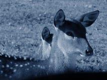 Animaux de forêt images stock