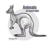 Animaux de kangourou d'Australie illustration libre de droits