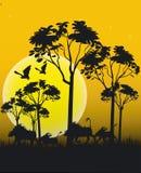 Animaux de l'Afrique Image stock
