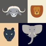 Animaux de l'Afrique Grandes cinq têtes Illustration de vecteur d'un appartement Photographie stock libre de droits
