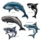 Animaux de mer géants baleine et icônes de vecteur de requin réglées illustration stock
