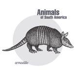 Animaux de tatou de l'Amérique du Sud illustration de vecteur
