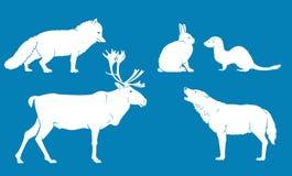 Animaux de terre arctiques Photo stock