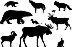Animaux de terre du nord arctiques réglés Photos stock