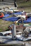 Animaux de tour de carrousel s'étendant sur la terre pour fixer et nettoyer Photos stock