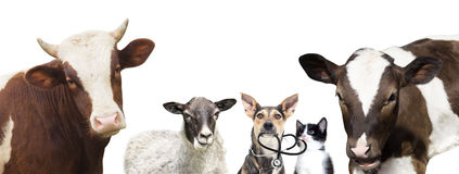 Animaux de vétérinaire Photo libre de droits