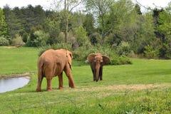 Animaux de zoo. Éléphant Photographie stock libre de droits