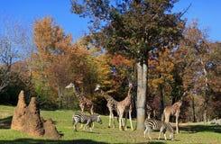 Animaux de zoo Images stock