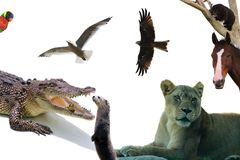 Animaux du collage du monde sur un fond blanc Photographie stock libre de droits