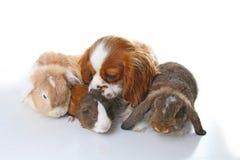 Animaux ensemble Vrais amis d'animal familier Amitié d'animal de cobaye de chien de lapin Les animaux familiers s'aime Beau caval Images stock