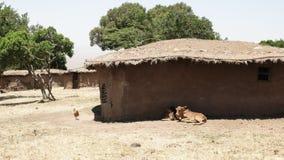 Animaux et huttes de boue dans un manyatta traditionnel de masai Mara, Kenya banque de vidéos