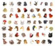 Animaux et oiseaux Photo stock