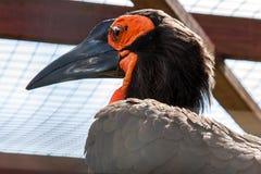 Animaux et oiseaux dans une cage Images libres de droits