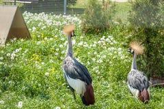 Animaux et oiseaux dans une cage Images stock