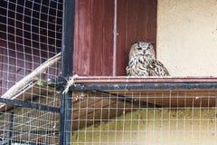 Animaux et oiseaux dans une cage Photo libre de droits