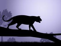 Animaux et prédateur de Tiger On Tree Indicates Wild Image stock