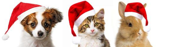 Animaux familiers avec des chapeaux de Santa Image libre de droits