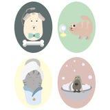 Animaux familiers : chien, chat toilettage Ensemble de grandes icônes rondes Images stock