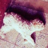 Animaux familiers de chien image libre de droits