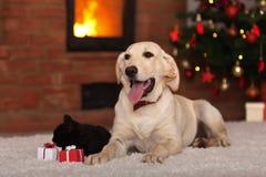 Animaux familiers de famille recevant des cadeaux pour Noël Image stock