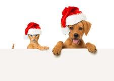 Animaux familiers de Noël Image libre de droits
