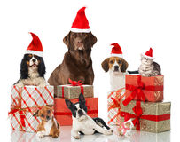 Animaux familiers de Noël Images libres de droits
