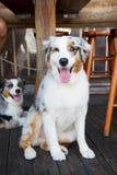 Animaux familiers et animaux domestiques Images stock