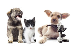 Animaux familiers et microscope images stock