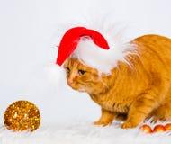 animaux Le blanc de chat de gingembre d'isolement, chapeau de Noël, arbre joue ! Images stock