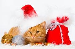 animaux Le blanc de chat de gingembre d'isolement, chapeau de Noël, arbre joue ! Images libres de droits