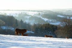 Animaux pendant l'hiver Image stock