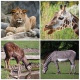 Animaux sauvages Photos libres de droits