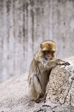 Animaux sauvages Image libre de droits