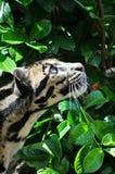Animaux sauvages Photographie stock libre de droits