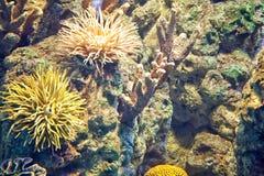 Animaux sous-marins Photo libre de droits