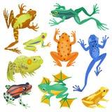Animaux tropicaux de bande dessinée de grenouille illustration libre de droits