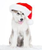 animaux Un blanc enroué de chiot, chapeau de Noël ! Images stock
