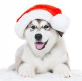 animaux Un blanc enroué de chiot d'isolement, chapeau de Noël ! Photo libre de droits