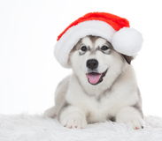 animaux Un blanc enroué de chiot d'isolement, chapeau de Noël ! Photos libres de droits