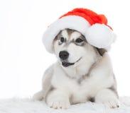 animaux Un blanc enroué de chiot d'isolement, chapeau de Noël ! Image stock