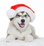 animaux Un blanc enroué de chiot d'isolement, chapeau de Noël ! Images libres de droits