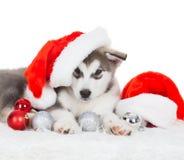 animaux Un blanc enroué de chiot d'isolement, chapeau de Noël, jouet d'arbre Images libres de droits