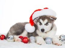 animaux Un blanc enroué de chiot d'isolement, chapeau de Noël, jouet d'arbre Images stock