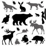 Animaux vivant dans la forêt européenne Image stock